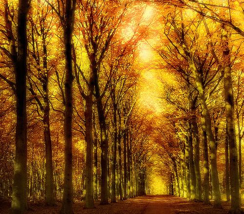the_golden_forest.jpg